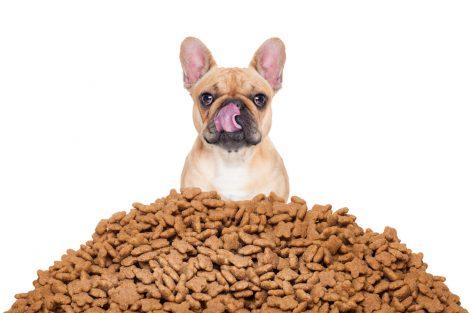Mi perro come muy rápido. ¿Qué debo hacer?