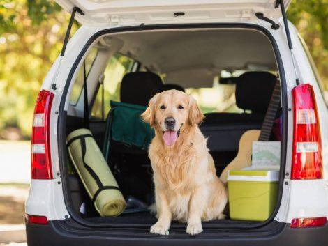 Preparativos para salir de viaje con tu perro.