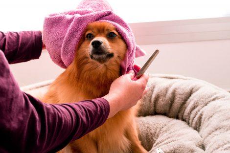 ¿Cuándo debo pelar a mi perro?