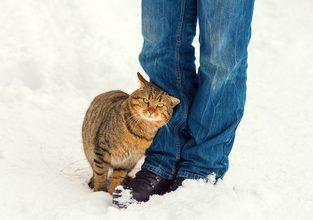 ¿Por qué mi gato se frota en mis piernas?